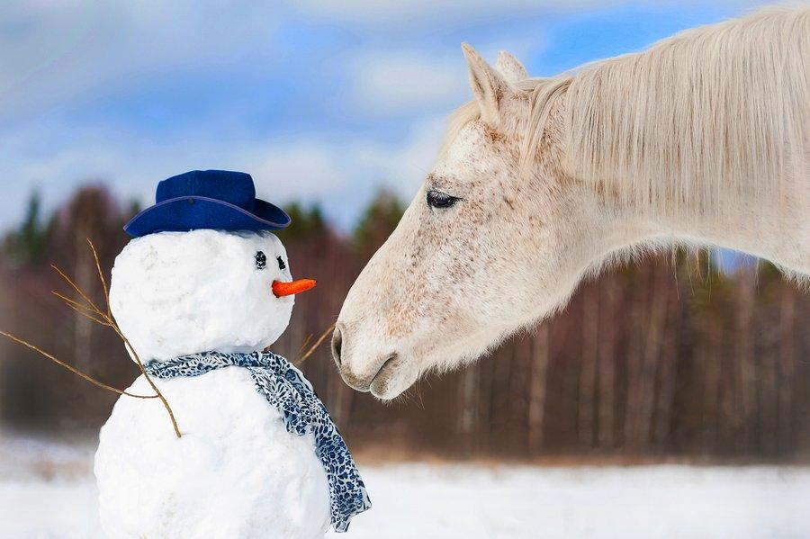 Zimowisko z nauką jazdy konnej