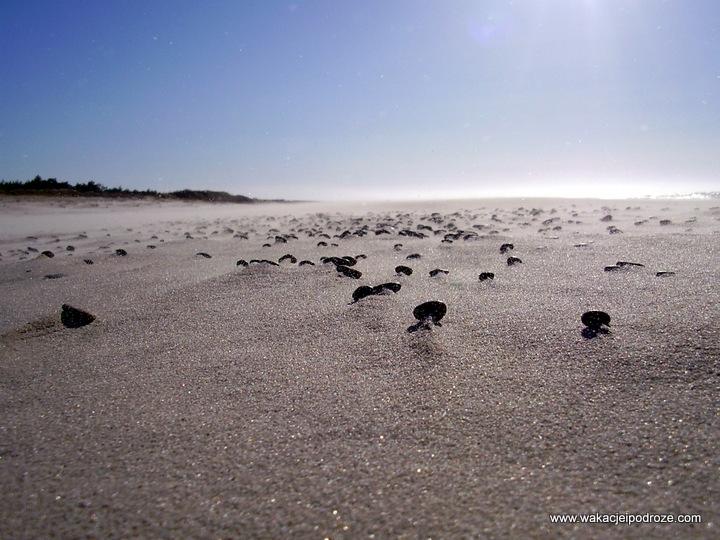 Najpiękniejsze polskie plaże